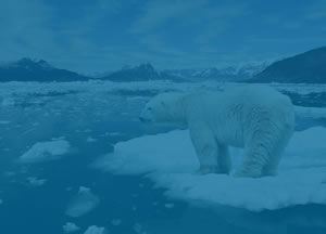 Climate Change site Polar Bear Image